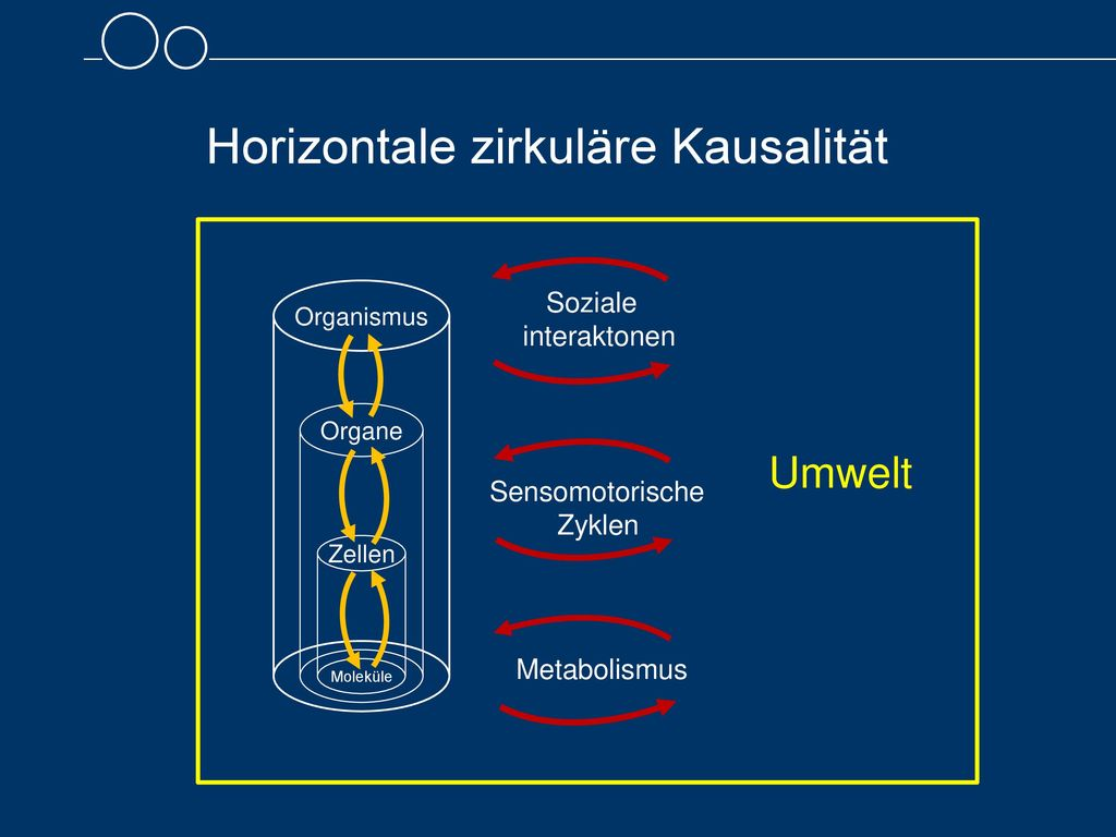 Sensomotorische Zyklen