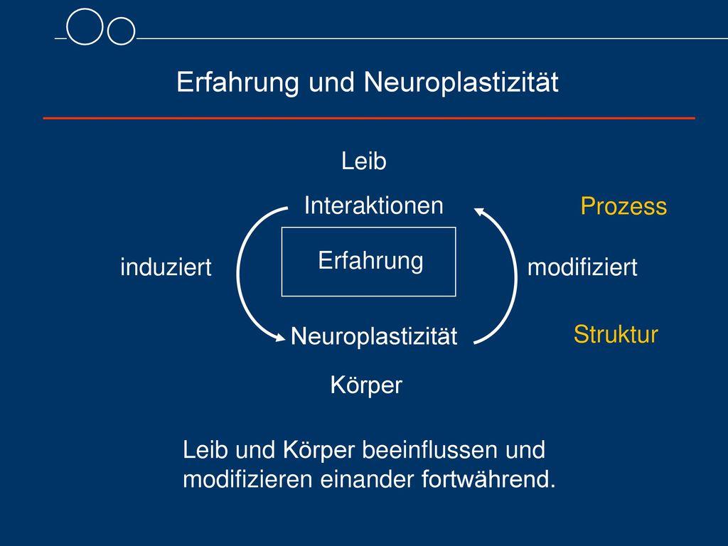 Erfahrung und Neuroplastizität