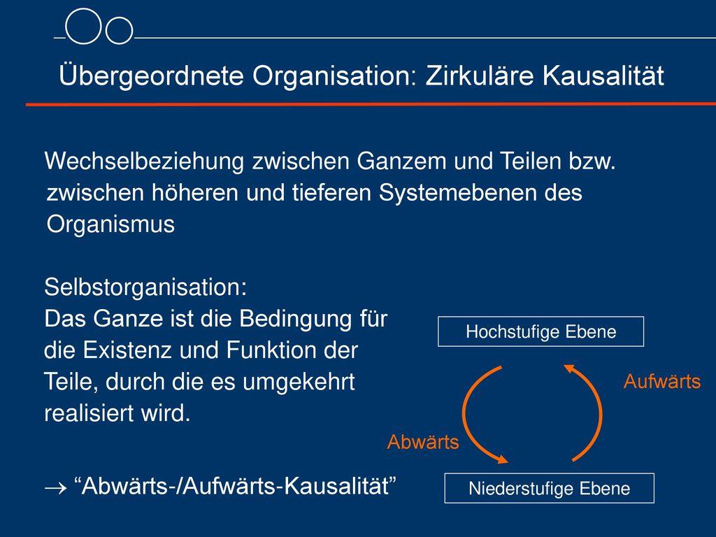Übergeordnete Organisation: Zirkuläre Kausalität