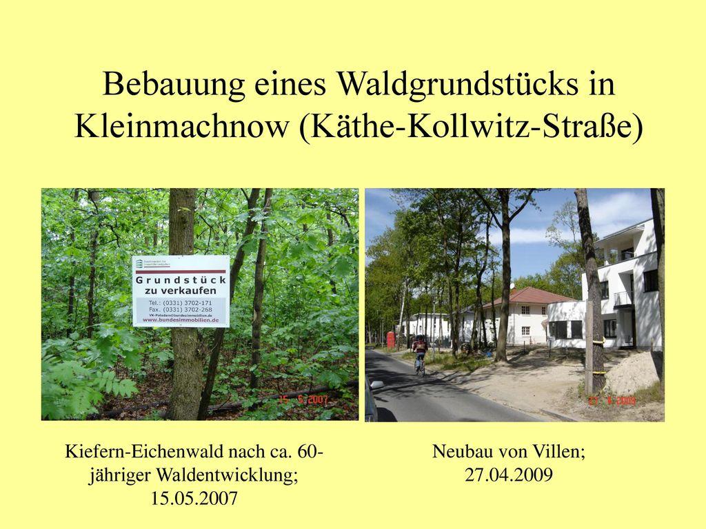 Bebauung eines Waldgrundstücks in Kleinmachnow (Käthe-Kollwitz-Straße)