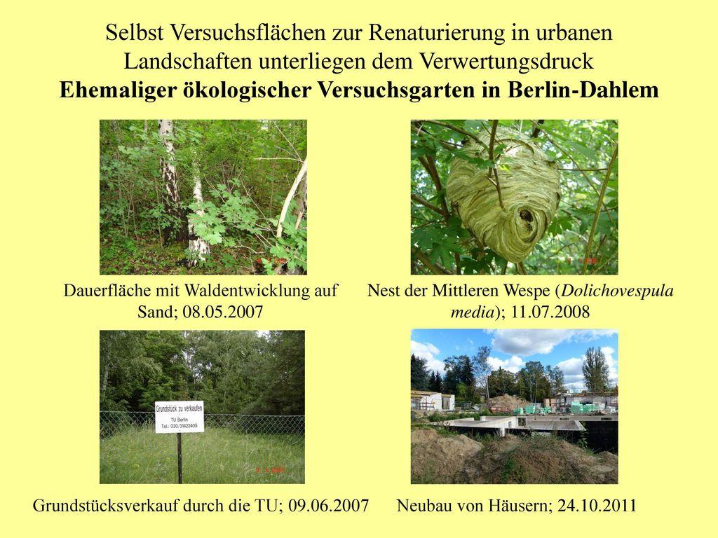 Selbst Versuchsflächen zur Renaturierung in urbanen Landschaften unterliegen dem Verwertungsdruck Ehemaliger ökologischer Versuchsgarten in Berlin-Dahlem