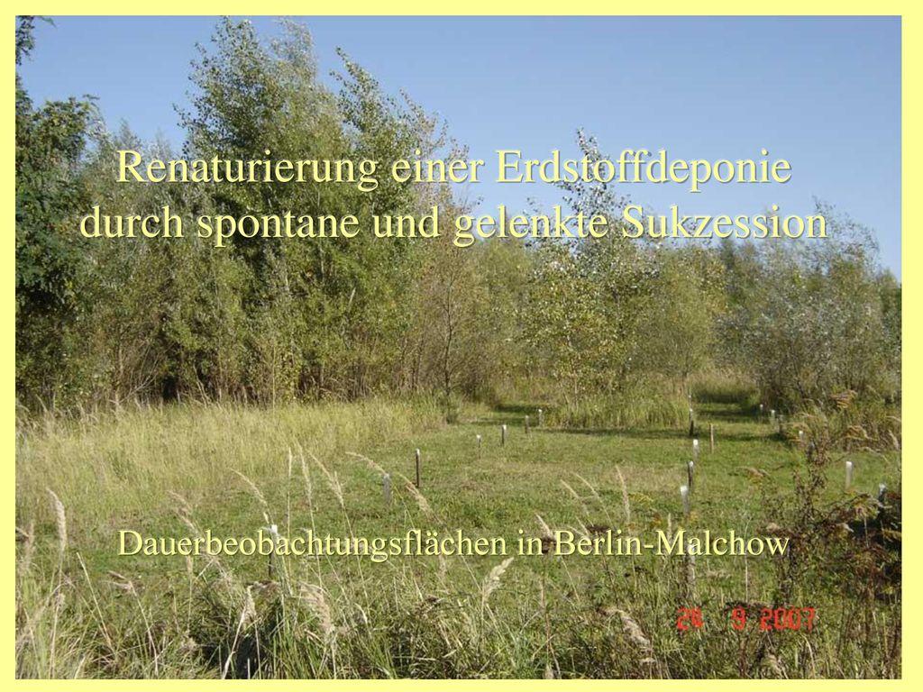 Dauerbeobachtungsflächen in Berlin-Malchow