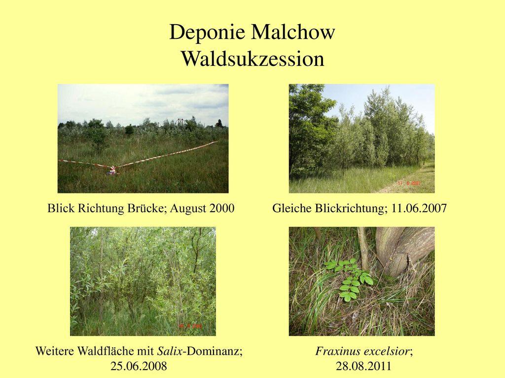 Deponie Malchow Waldsukzession