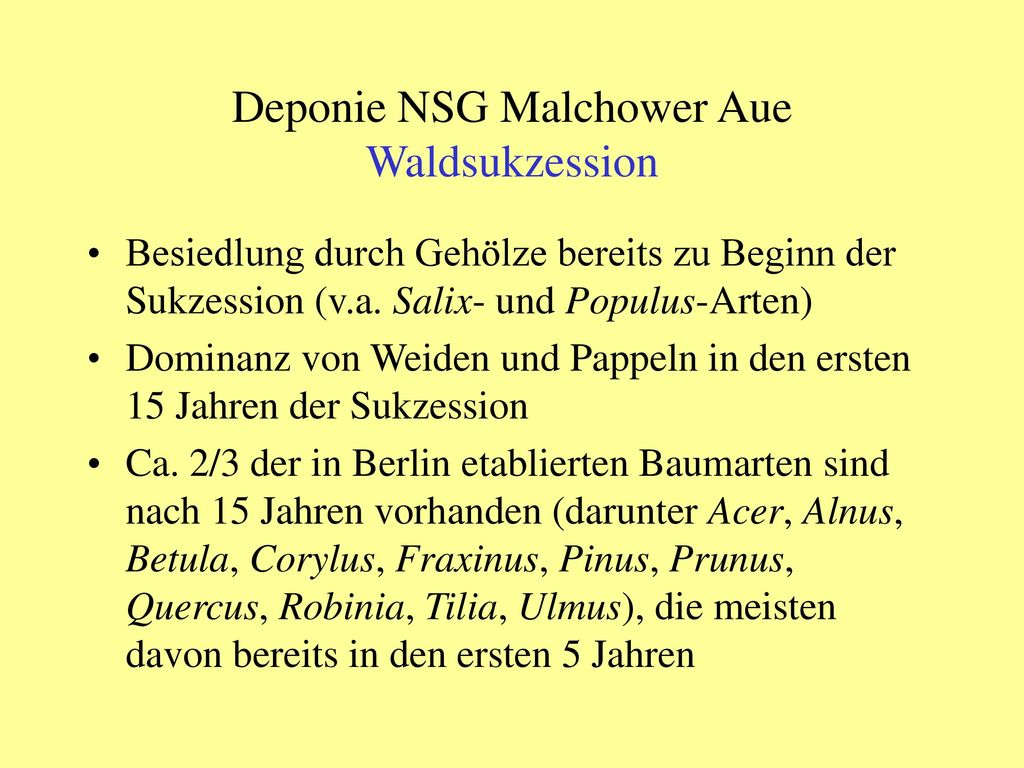 Deponie NSG Malchower Aue Waldsukzession