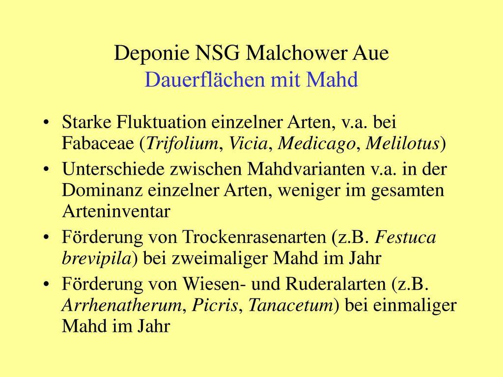 Deponie NSG Malchower Aue Dauerflächen mit Mahd
