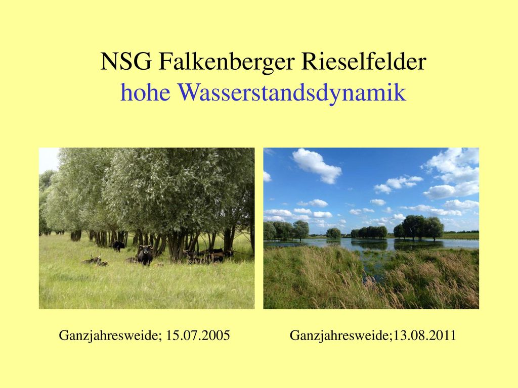NSG Falkenberger Rieselfelder hohe Wasserstandsdynamik