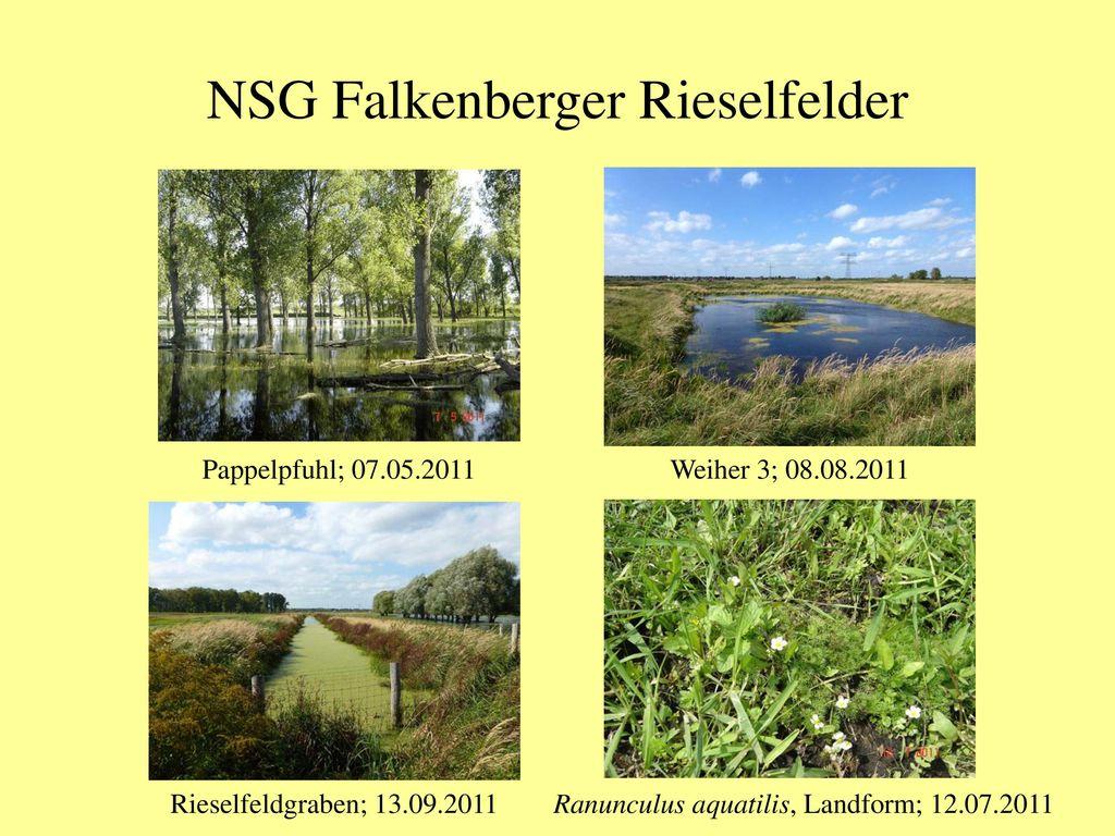 NSG Falkenberger Rieselfelder