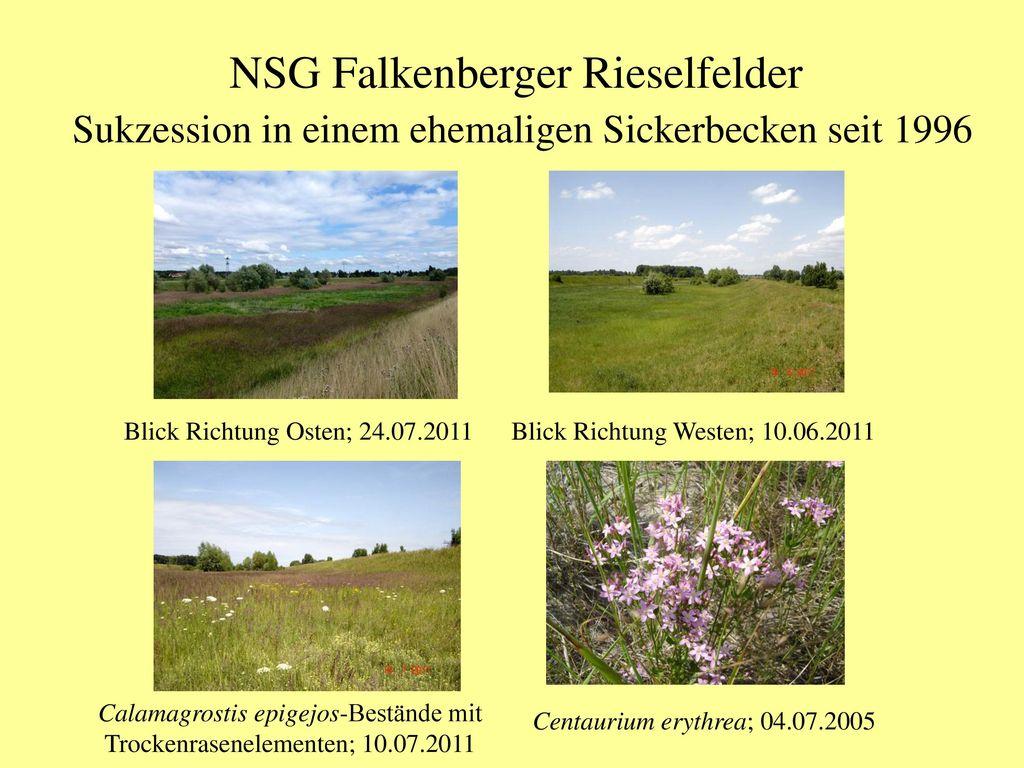 NSG Falkenberger Rieselfelder Sukzession in einem ehemaligen Sickerbecken seit 1996