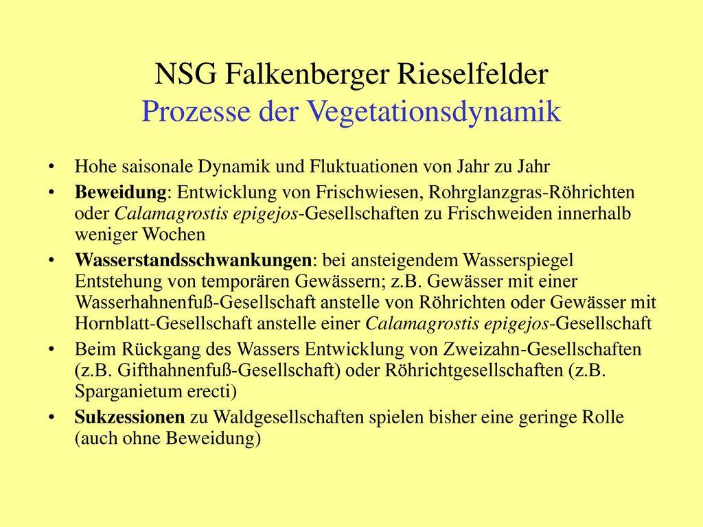 NSG Falkenberger Rieselfelder Prozesse der Vegetationsdynamik