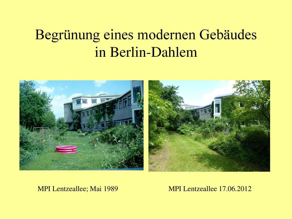Begrünung eines modernen Gebäudes in Berlin-Dahlem