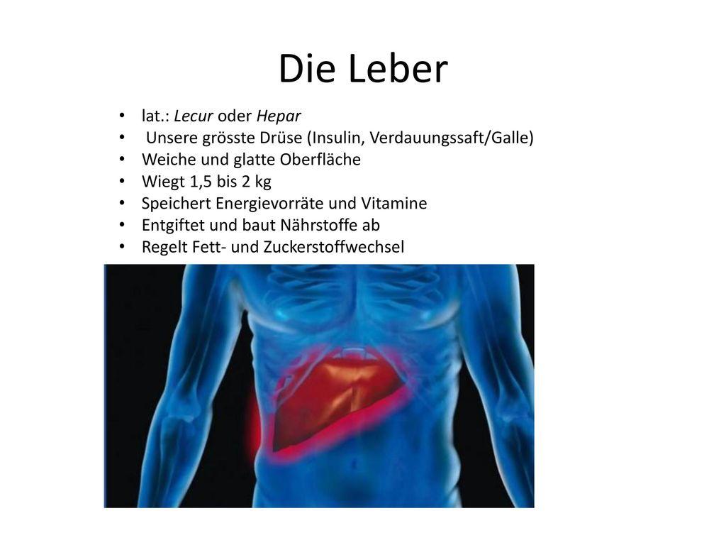 Die Leber lat.: Lecur oder Hepar