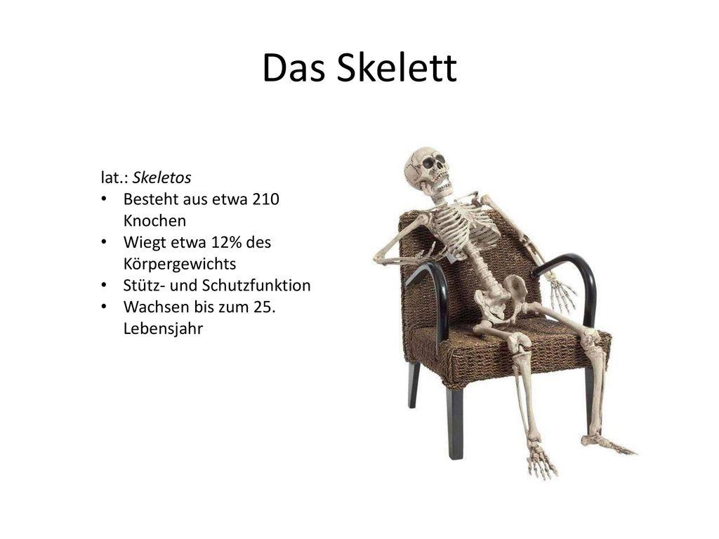 Das Skelett lat.: Skeletos Besteht aus etwa 210 Knochen