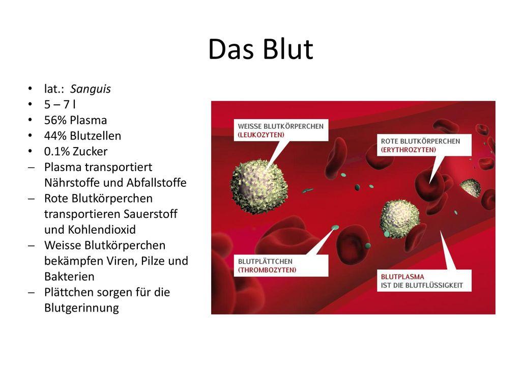 Das Blut lat.: Sanguis 5 – 7 l 56% Plasma 44% Blutzellen 0.1% Zucker