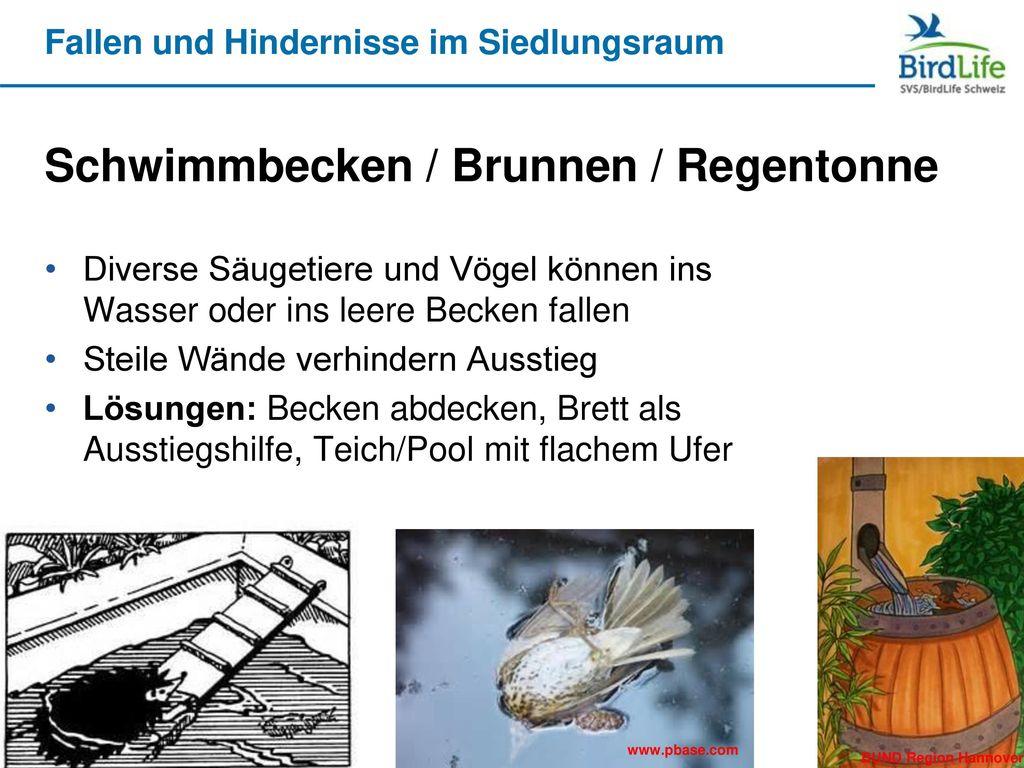 Schwimmbecken / Brunnen / Regentonne