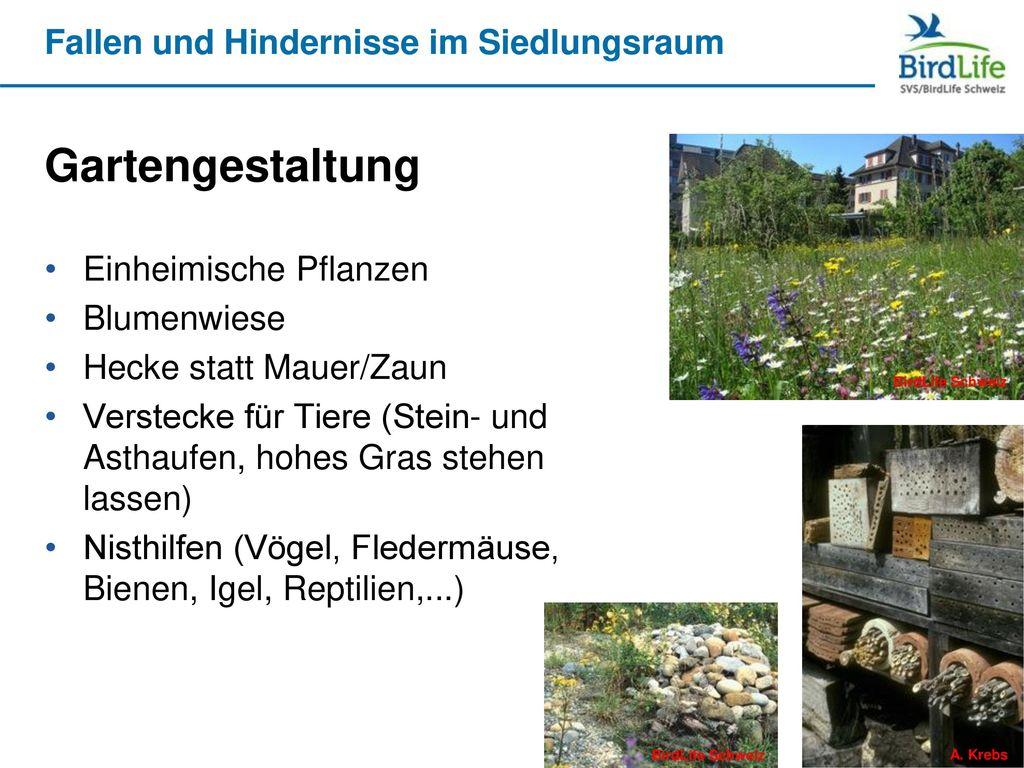 Gartengestaltung Einheimische Pflanzen Blumenwiese