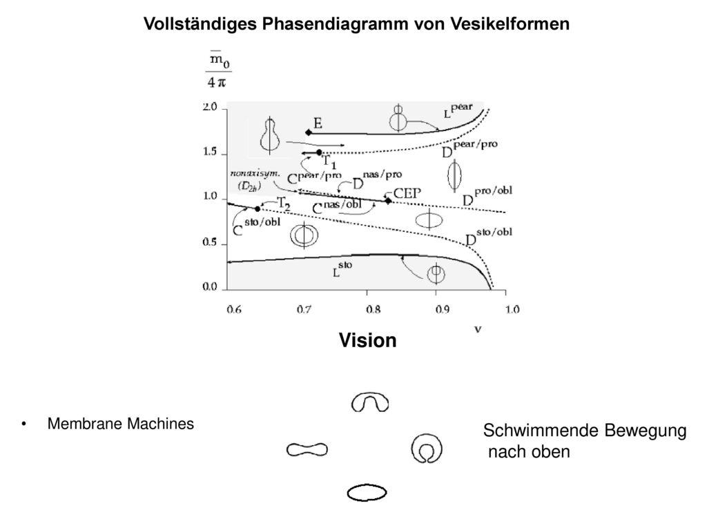 Vision Vollständiges Phasendiagramm von Vesikelformen