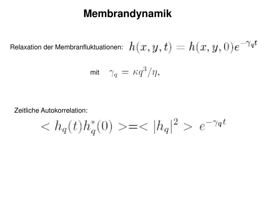 Membrandynamik Relaxation der Membranfluktuationen: mit
