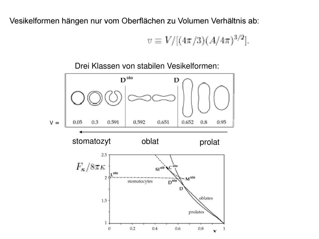 Vesikelformen hängen nur vom Oberflächen zu Volumen Verhältnis ab:
