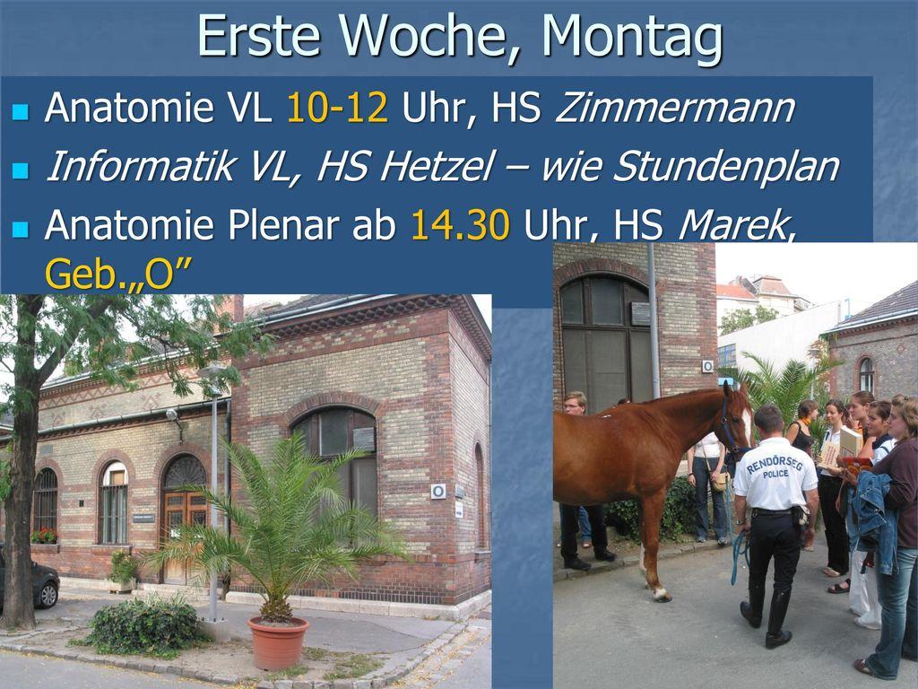 Erste Woche, Montag Anatomie VL 10-12 Uhr, HS Zimmermann