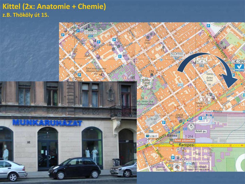 Kittel (2x: Anatomie + Chemie)