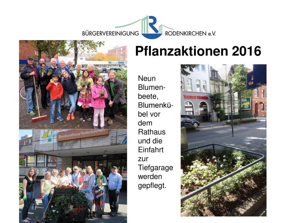Pflanzaktionen 2016 Neun. Blumen-beete, Blumenkü-bel vor dem Rathaus und die Einfahrt zur Tiefgarage.