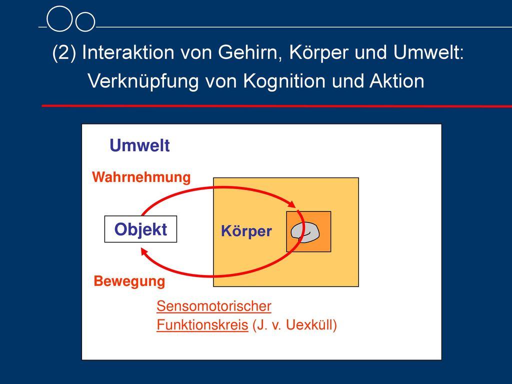 (2) Interaktion von Gehirn, Körper und Umwelt: Verknüpfung von Kognition und Aktion