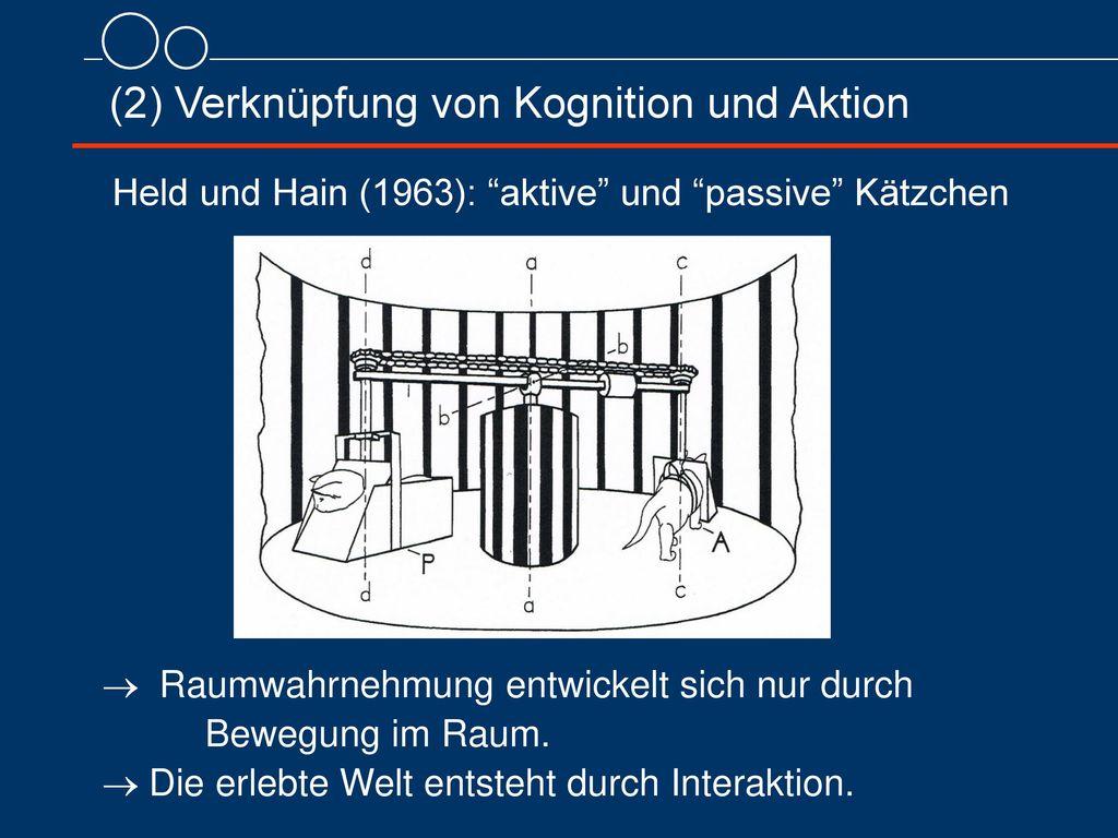 (2) Verknüpfung von Kognition und Aktion