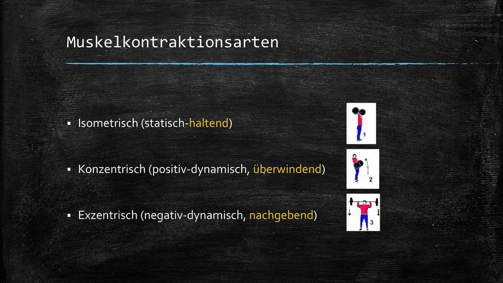 Muskelkontraktionsarten