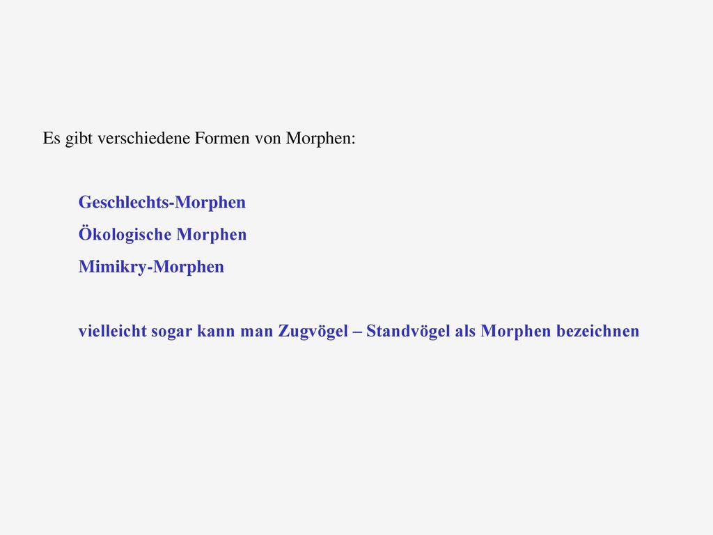 Es gibt verschiedene Formen von Morphen: