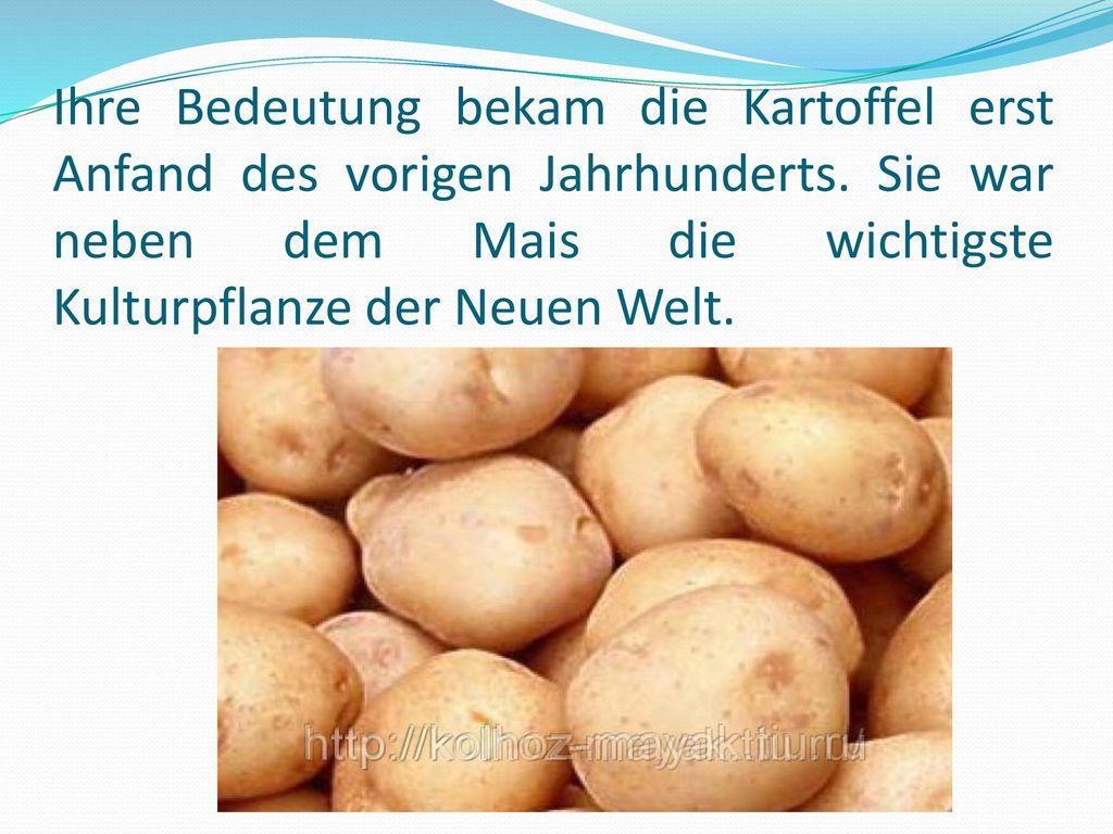 Ihre Bedeutung bekam die Kartoffel erst Anfand des vorigen Jahrhunderts.