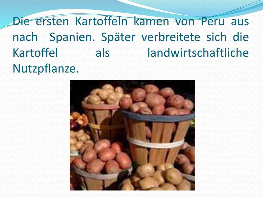 Die ersten Kartoffeln kamen von Peru aus nach Spanien