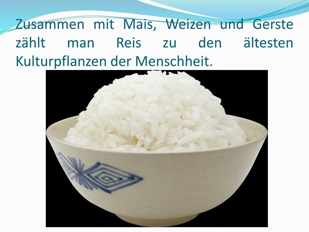 Zusammen mit Mais, Weizen und Gerste zählt man Reis zu den ältesten Kulturpflanzen der Menschheit.