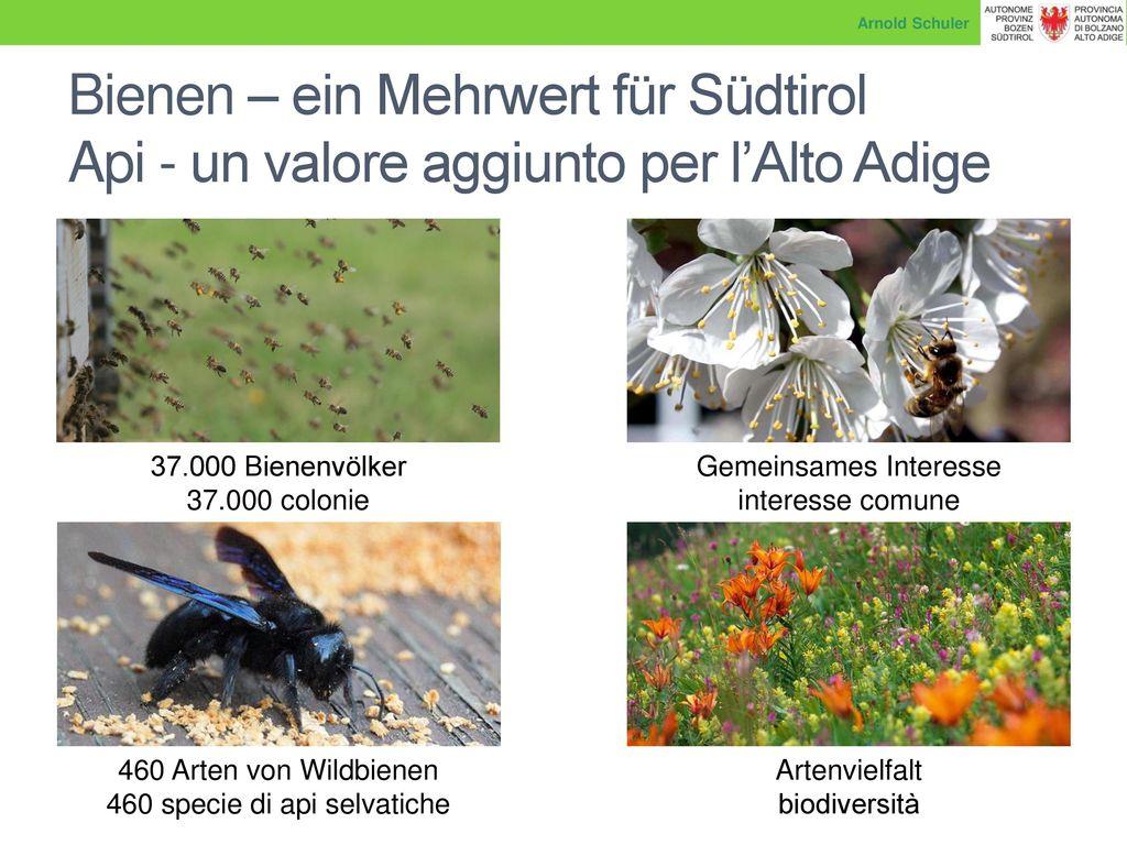Arnold Schuler Bienen – ein Mehrwert für Südtirol Api - un valore aggiunto per l'Alto Adige. 37.000 Bienenvölker.