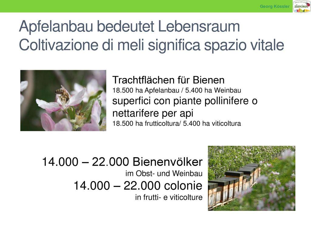 Georg Kössler Apfelanbau bedeutet Lebensraum Coltivazione di meli significa spazio vitale. Trachtflächen für Bienen.