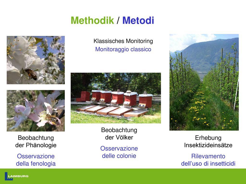 Methodik / Metodi Beobachtung der Völker Osservazione delle colonie