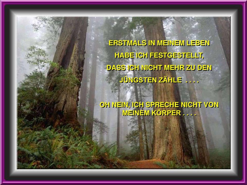 ERSTMALS IN MEINEM LEBEN HABE ICH FESTGESTELLT,