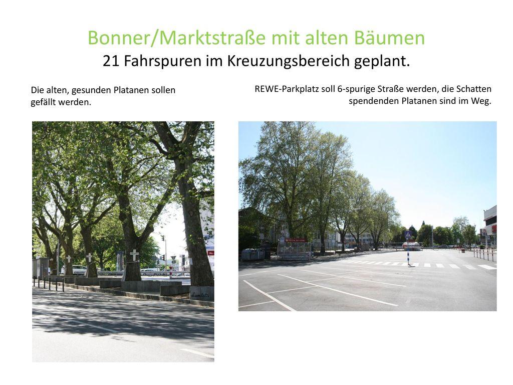 Bonner/Marktstraße mit alten Bäumen