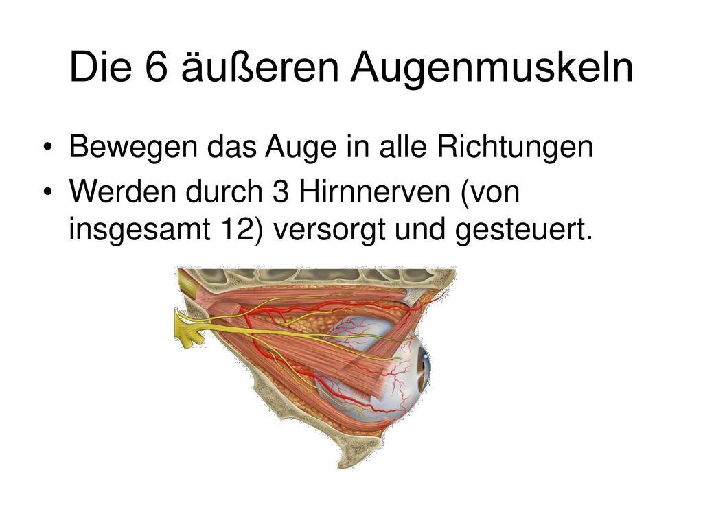 Erfreut Augenmuskeln Anatomie Fotos - Physiologie Von Menschlichen ...