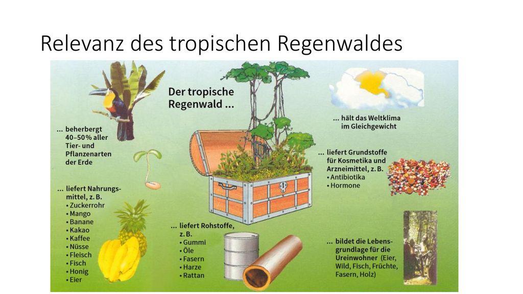 Relevanz des tropischen Regenwaldes