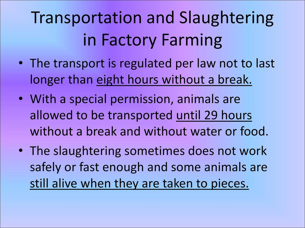 Transportation and Slaughtering in Factory Farming
