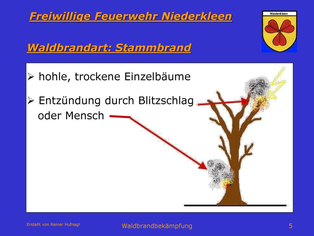 Waldbrandart: Stammbrand
