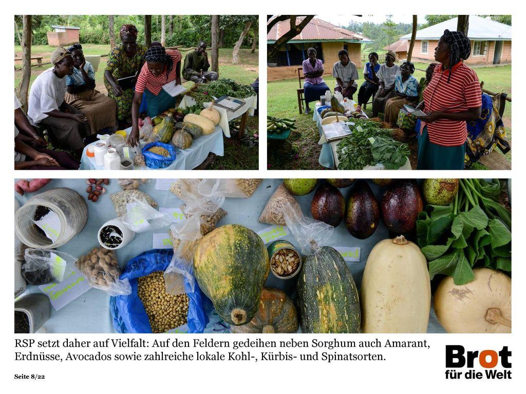 RSP setzt daher auf Vielfalt: Auf den Feldern gedeihen neben Sorghum auch Amarant, Erdnüsse, Avocados sowie zahlreiche lokale Kohl-, Kürbis- und Spinatsorten.