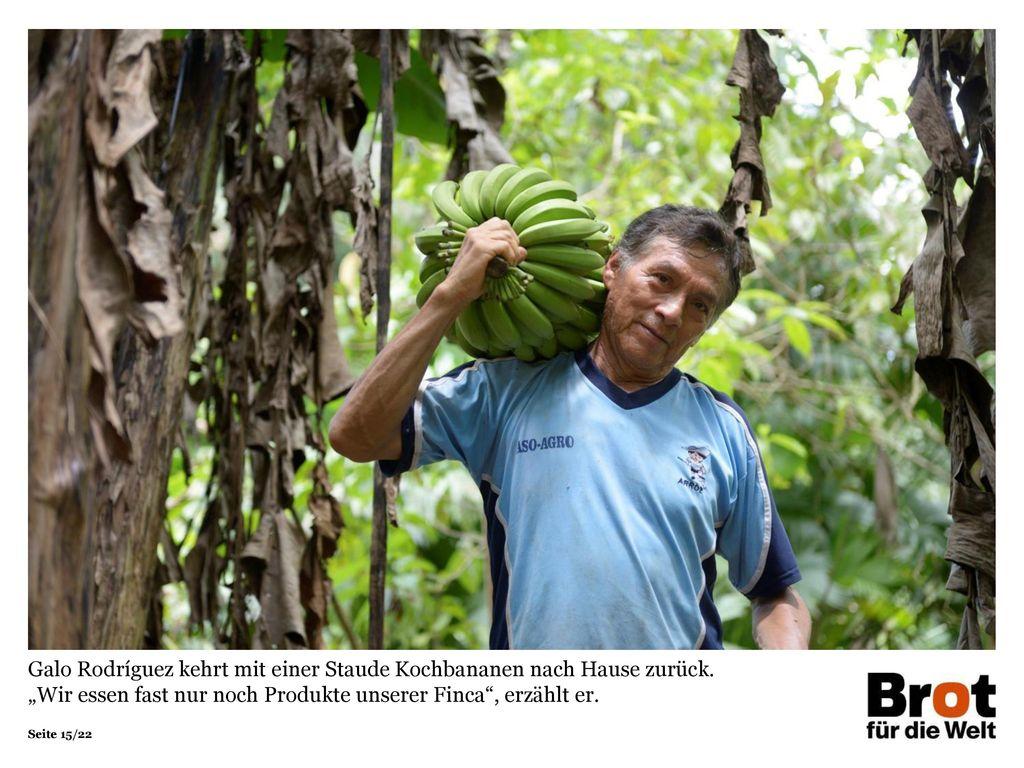 Galo Rodríguez kehrt mit einer Staude Kochbananen nach Hause zurück