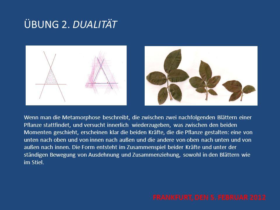 ÜBUNG 2. DUALITÄT Wenn man die Metamorphose beschreibt, die zwischen zwei nachfolgenden Blättern einer Pflanze stattfindet, und versucht innerlich wiederzugeben, was zwischen den beiden Momenten geschieht, erscheinen klar die beiden Kräfte, die die Pflanze gestalten: eine von unten nach oben und von innen nach außen und die andere von oben nach unten und von außen nach innen. Die Form entsteht im Zusammenspiel beider Kräfte und unter der ständigen Bewegung von Ausdehnung und Zusammenziehung, sowohl in den Blättern wie im Stiel.