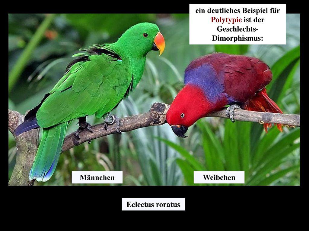 ein deutliches Beispiel für Polytypie ist der Geschlechts-Dimorphismus: