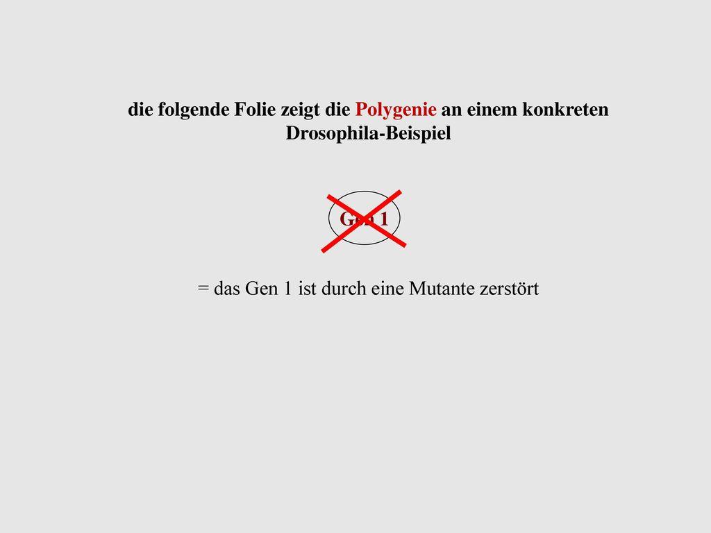 = das Gen 1 ist durch eine Mutante zerstört