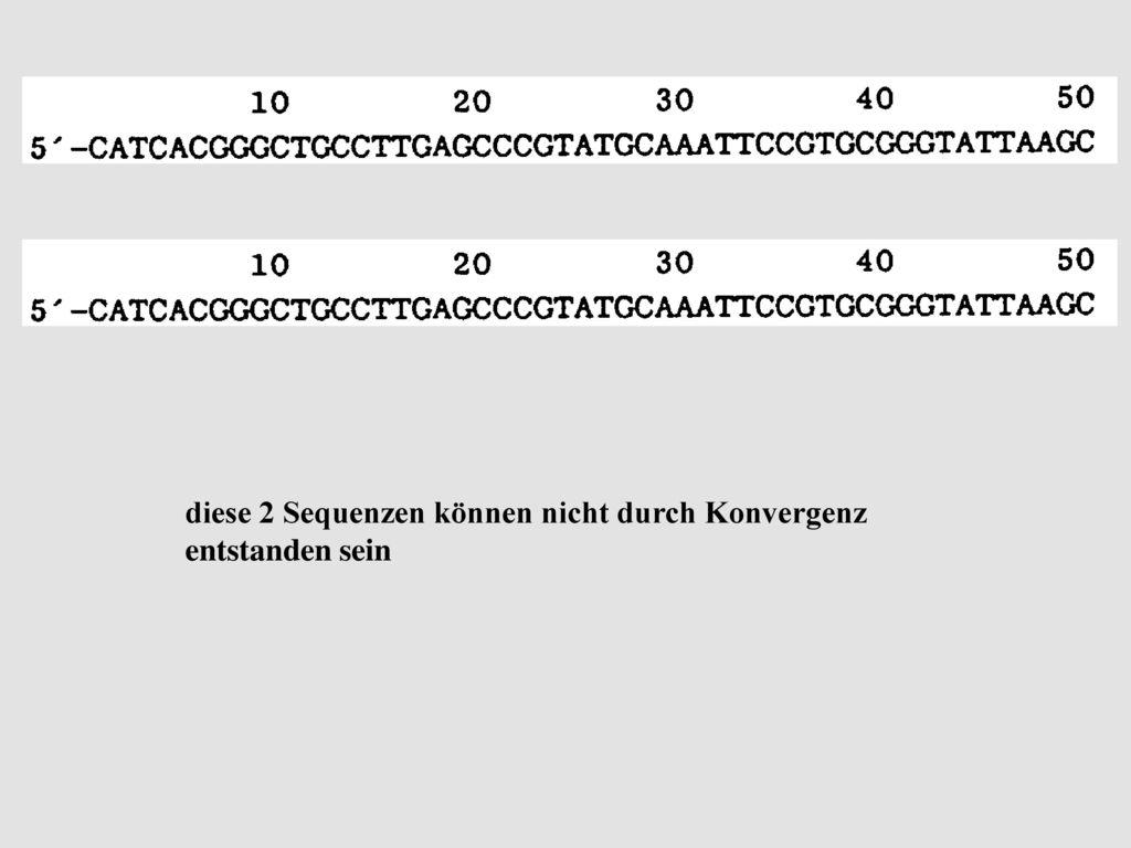 diese 2 Sequenzen können nicht durch Konvergenz entstanden sein