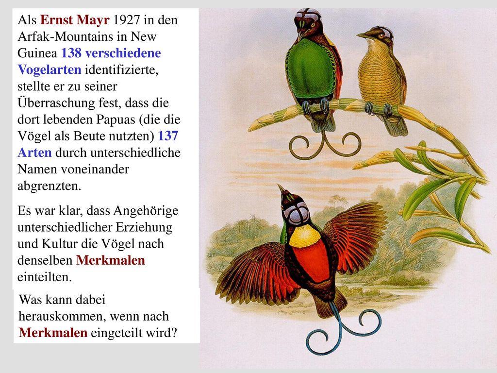 Als Ernst Mayr 1927 in den Arfak-Mountains in New Guinea 138 verschiedene Vogelarten identifizierte, stellte er zu seiner Überraschung fest, dass die dort lebenden Papuas (die die Vögel als Beute nutzten) 137 Arten durch unterschiedliche Namen voneinander abgrenzten.