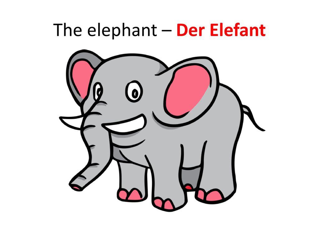 The elephant – Der Elefant