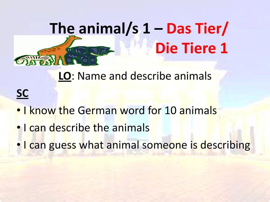 The animal/s 1 – Das Tier/ Die Tiere 1
